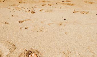 Hawaii 2012:  Part 1