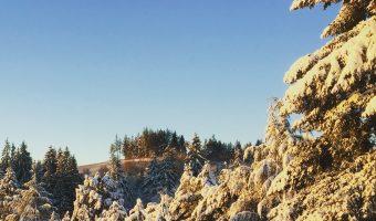 Winter Days…Almost Spring